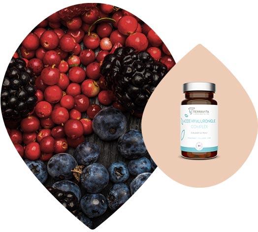 Aliments riches en resveratrol